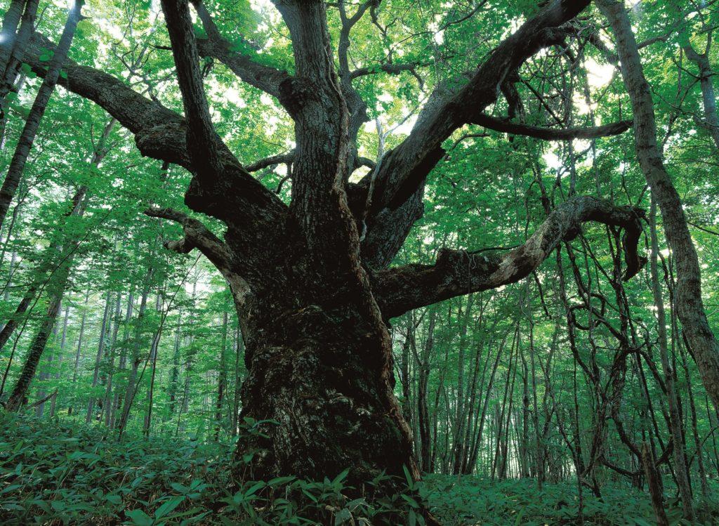 津別町の森林