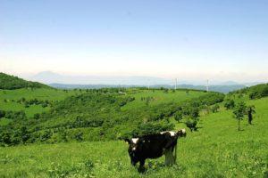 乳用牛の飼育数・生乳生産量ともに東北で1位の町